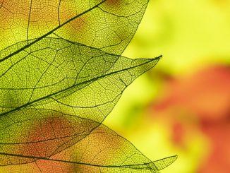 feuilles-automne freepik